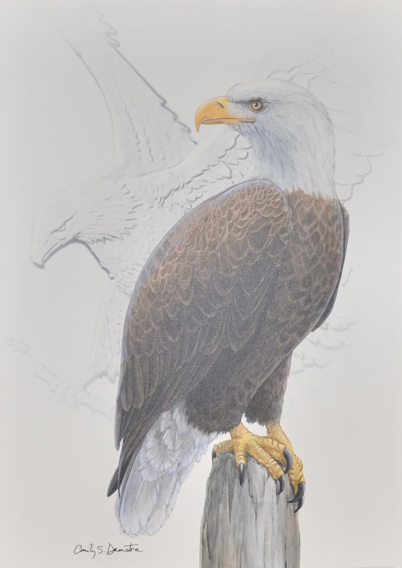 thumbnail image for Acclaimed Coin Designer Emily Damstra Signs and Donates Eagles Artwork To ANA
